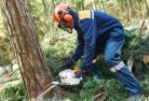 Arnhem Land Tree cutting services 21